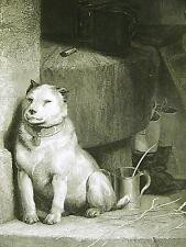 "Edwin Landseer White Bull Terrier or Stray ""Low Life"" 1870 Antique Print Matted"