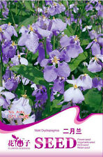 Original Package 100 Violet Orychophragmus Seeds Orychophragmus Violaceus A185
