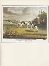 """1974 Vintage HUNTING """"PARTRIDGE SHOOTING #2"""" POINTERS DOGS COLOR Art Lithograph"""
