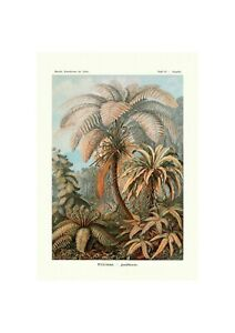 Fern Botanical Poster | Marine life Illustration German Art Ernst Haeckel,1904