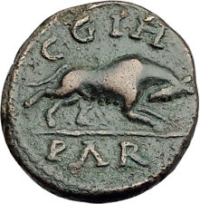 Severus Alexander - Parion Parium Mysia Authentic Ancient Roman Coin WOLF i64817