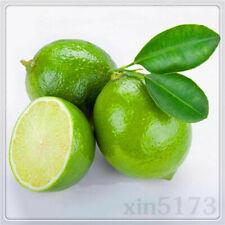 Garden Fruit Seeds Thai Organic Key Lime Citrus Lemon Seeds 20PCS Wholesale