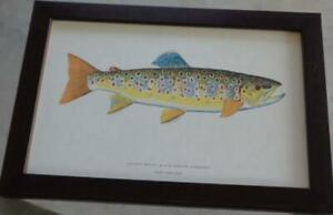 Artwork Print – Brown Trout – Black Forest, Germany – PROFESSIONALLY FRAMED