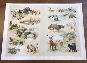 Vintage 1910 Wild & Domestic Food Animals Brackett&Wilhelms Co Chromolithiograph