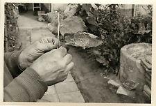 PHOTO ANCIENNE - VINTAGE SNAPSHOT - CURIOSITÉ MAIN JARDIN FEUILLE ÉTRANGE - HAND