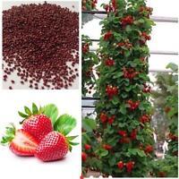 200pcs Fruits Fraises Climbing Fraise Plante Rouge Légumes Graines de jardin