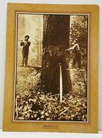 TIMBER FALLERS Lumberjacks Large Tree Lsne Pioneer Museum Postcard J8