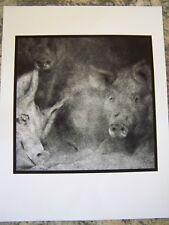 FINE ART PHOTO 3 PIGS ARKANSAS 1971 ARTIST ROB EVANS PHOTOGRAPHER ARCHIVAL PRINT