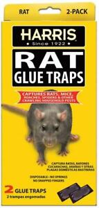 HARRIS Rat Glue Traps, Fully Disposable 2-Pack