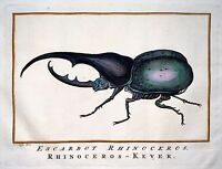1770 Schley - Hand coloured engraving RHINOCEROS BEETLE MEXICO