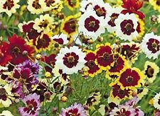 Bushy Perennial Flowers & Plants