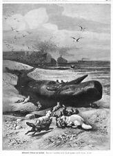 Wal, Pottwal gestrandet, mit Eisfüchsen, Original-Holzstich von ca. 1885