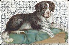 (AK3) Hund Hundemotiv gelaufen 1903