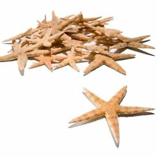"""Real Starfish Star Fish Decorations (30 Pieces) 1/2"""" - 3"""""""