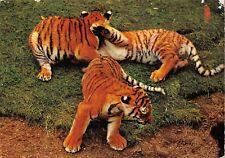 BR89022 tiger tigre   animal animaux