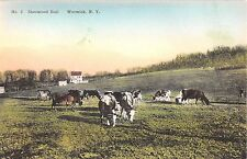 1920's? Cattle Grazing Sherwood Hall Warwick NY post card Orange county