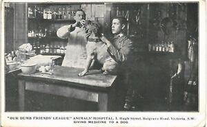 Animal Welfare. Our Dumb Friends League Animals Hospital, Victoria. Dog Medicine