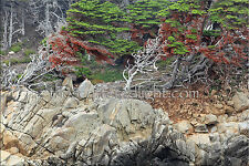 POINT LOBOS / TRIPTYCH 1 / PHOTOGRAPHIC PRINTS