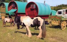 Gypsy horses,Romany Wagons & Flat top at the Seamer Horse Fair Scarborough  p.c