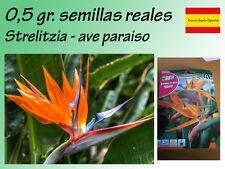 Seeds Strelitzia Strelitzia reginae 0,5 gr Ave del paraiso semillas autenticas