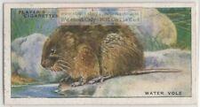 European Water Vole Semiaquatic Rodent Arvicola amphibius 1930s Ad Trade Card