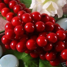 Wholesale natural Red Coral Round Loose Beads 15'' inch 6mm