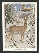 ST. PIERRE MK 1964 FAUNA WILD HIRSCH REH DEER MAXIMUMKARTE MAXIMUM CARD MC d4649