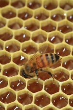 Over 100 Beekeeping Books and Guides on 1 CD
