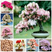 10 Sakura Tree Seeds Mixed Rare Eastern Cherry Blossom Bonsai Plant Garden Decor