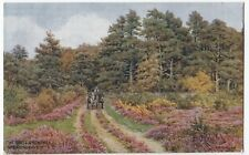 Hampshire; New Forest, Pine Trees & Heather Artist Signed AR Quinton PPC, Unused