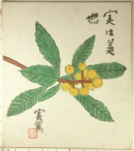 IS143 Bulk Buying Welcome! SHIKISHI Plant Flower Japanese Art Painting Picture