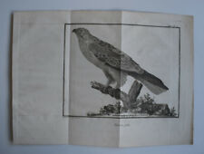 Oiseaux Faucon Patu GRAVURE MARTINET XVIIIeme siecle IN4