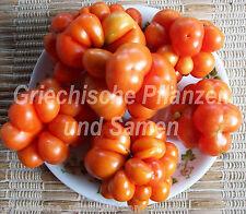 🔥 🍅 Siebenbürgen Tomate Reise-Tomaten Siebenbürgen 10 Samen