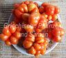 🔥Siebenbürgen Tomate Reise-Tomaten Siebenbürgen 10 Samen alte historische Sorte