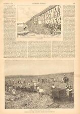 Hawaii, Cane Sugar Plantation, Sugar Culture, Vintage 1888 Antique Art Print