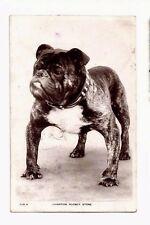 RPPC 626 A CHAMPION RODNEY STONE BULLDOG DOG Real Photo Postcard Omaha Nebraska