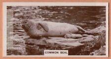 Common Seal Marine Ocean Mammal 1920s Ad Trade Card