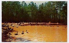 WADESBORO NC Gaddys Wild Goose Refuge Canada Geese Anson County postcard