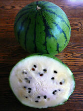 Organic Cream Of Saskatchewan Watermelon  20 Seeds Creamy Sweet White Flesh