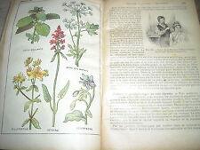 MEDICINA VEGETALE_FARMACIA_TERAPIE_STORIA NATURALE_ERBORISTERIA_BOTANICA_IGIENE