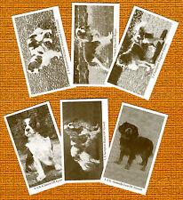 Cavalier King Charles Spaniel Set Named Dog Trade Cards