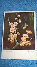 Carte postale Daisy Fleurs de printemps N° F 1307/58 Art de la bouche et pieds