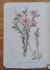 Van Houtte : linum - SCYPHANTHUS - Alstroemeria - PINEAPPLE - Salvia Leucantha