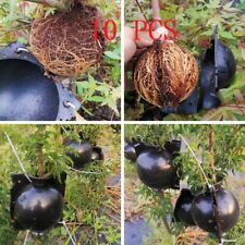 10Small Plant High Pressure Box Grafting Rooting Growing Device Propagation Ball