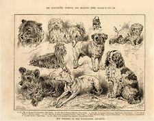 More details for skye terrier pug maltese pom ett yorkie dog show 1886 westminster aquarium toys