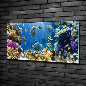MEER KORALLENRIFF Wandbilder xxl Bilder Vlies Leinwand Leinwandbilder 020112-19