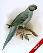EXTINCT BIRD PARROT BLUE GREEN PALEAEORNIS EXSUL PAINTING ART REAL CANVAS PRINT