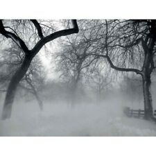 Nature Landscape Forest Snow Fog Ice Winter Black White 12X16 Inch Framed Print
