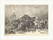 Sauhatz Wildschweine Jagd Hunde Jäger Gewehr Schilf Tiere Holzstich E 12828