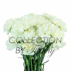 Fresh Flowers for Garland, Floral Arrangement, Birthday, Anniversary & Funera...